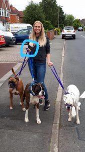 Clicker Boxer Redditch Dog Walking